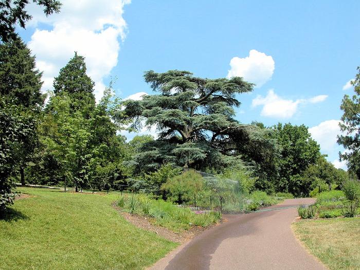 Общественный парк Morris Arboretum, Филадельфия 29727