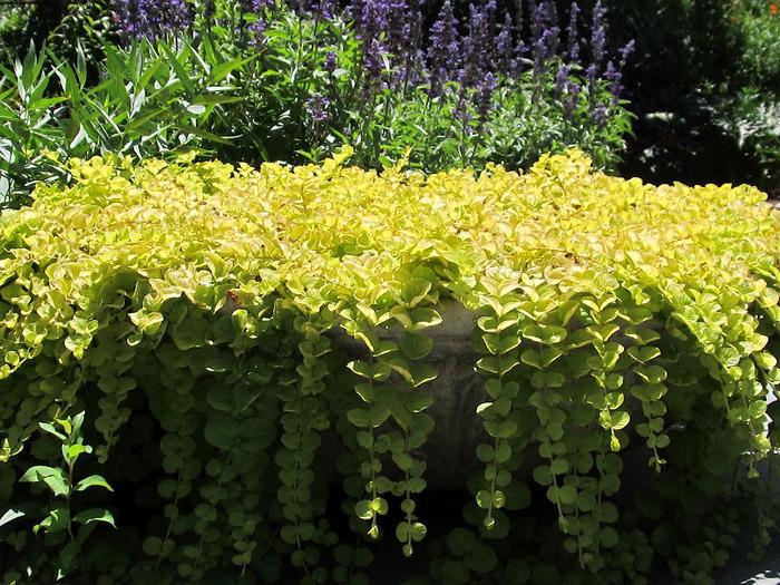 Общественный парк Morris Arboretum, Филадельфия 81955