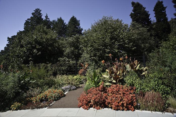 Общественный парк Morris Arboretum, Филадельфия 73952