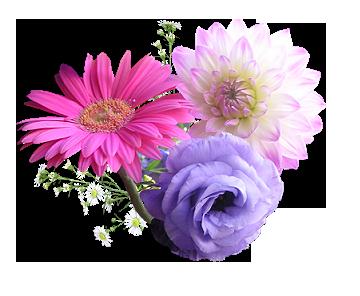 три цветка без подписи (360x296, 131Kb)
