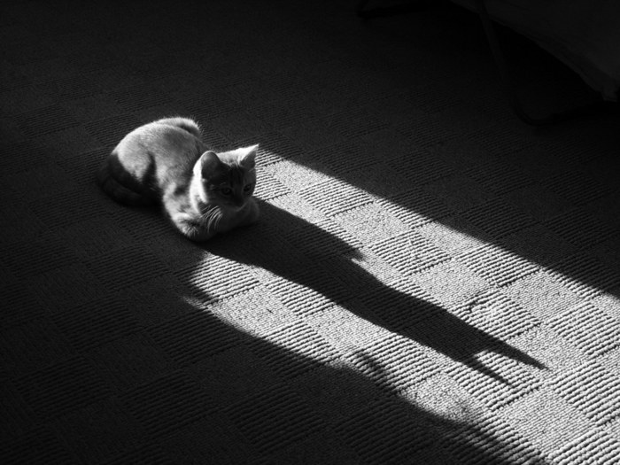 cats_cm_20120114_00207_001 (700x525, 84Kb)