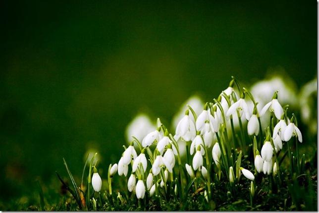 После долгой зимы весенние цветы
