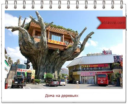 Дома на деревьях.