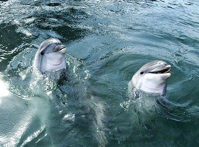 дельфин (400x296, 45Kb)