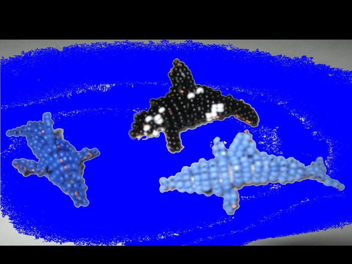 схема дельфин касатка из