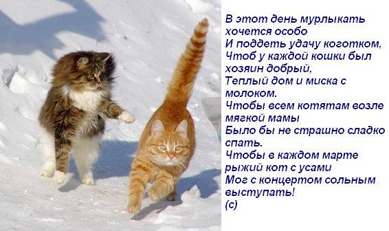кот (566x336, 42Kb)
