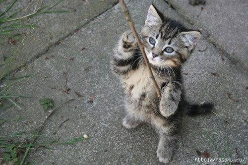 kittens_01 (500x333, 123Kb)