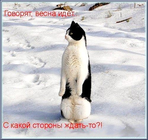Март! Весна! Кошки!!!. Обсуждение на LiveInternet - Российский ...