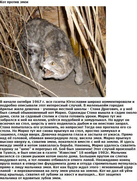 cat_01 (529x697, 132Kb)