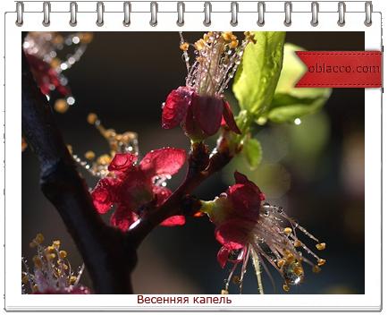 весна капель