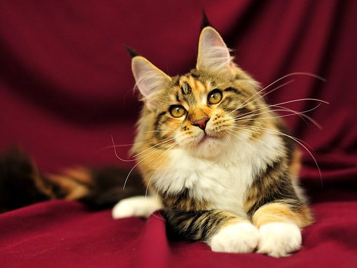 красивых котов и кошек