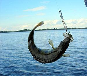 рыба (300x260, 22Kb)