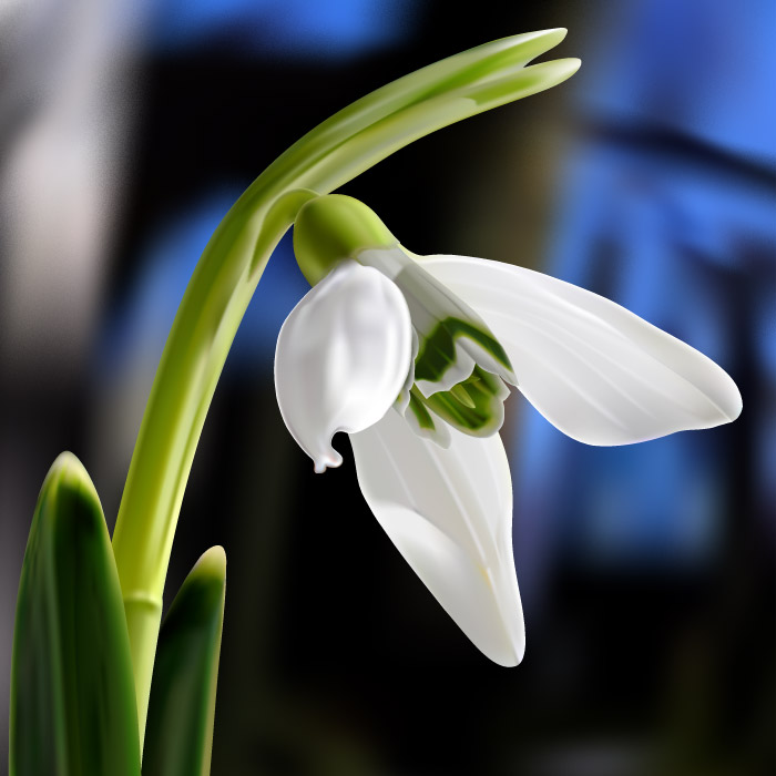 dphclub.com_1205516235snowdrop_by_barry07101963 (700x700, 67Kb)