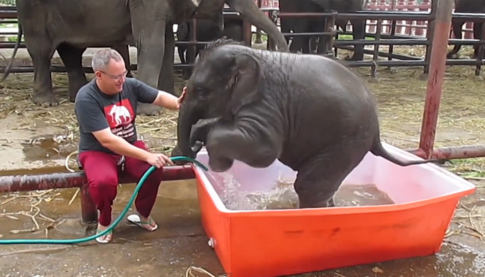 Elephant-Bathing (700x400, 106Kb)