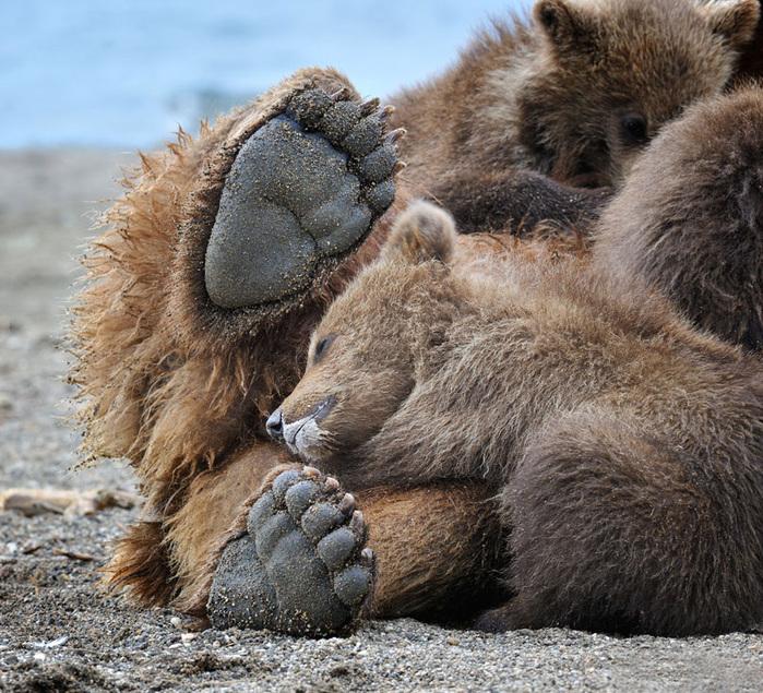 что снится медведю в игре матрешки
