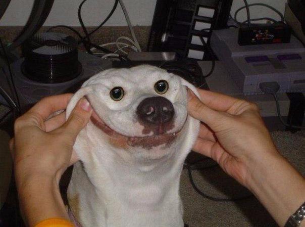 Смешные собаки2 (604x449, 177Kb)