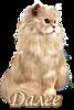 5230261_dalee_koshka (67x100, 13Kb)
