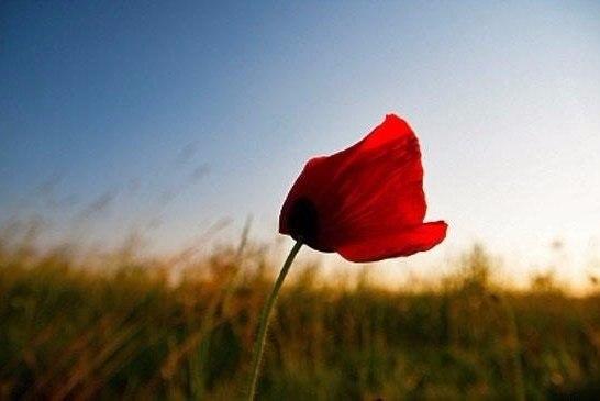 Сказка о ветре и цветке