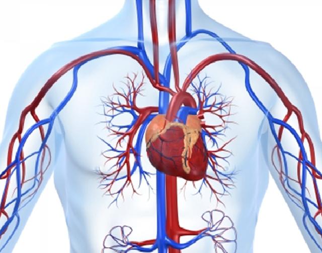 Тест (сердечно-сосудистая система) (640x502, 118Kb)
