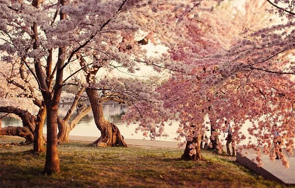 весна8 (600x382, 378Kb)
