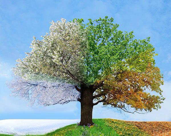 4seasonstree (600x477, 393Kb)