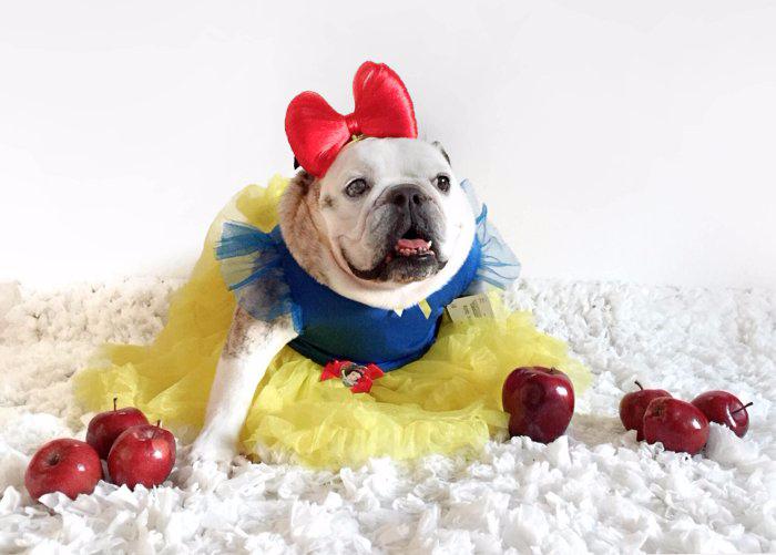 одежда для собак фото 1 (700x501, 218Kb)