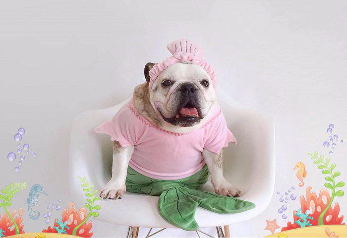 одежда для собак фото 3 (700x480, 175Kb)