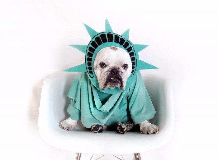 одежда для собак фото 7 (700x515, 158Kb)