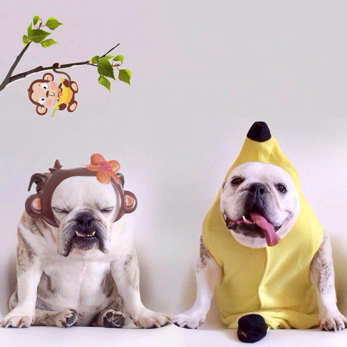 одежда для собак фото 9 (700x700, 255Kb)