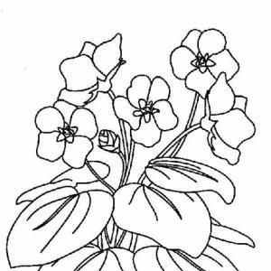 violets (300x300, 70Kb)