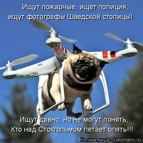 kotomatritsa_8k (480x480, 219Kb)
