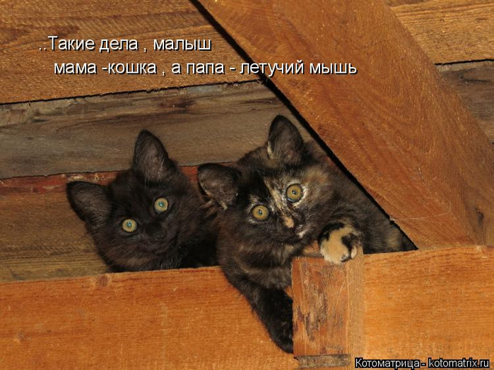 kotomatritsa_ZL (700x524, 386Kb)