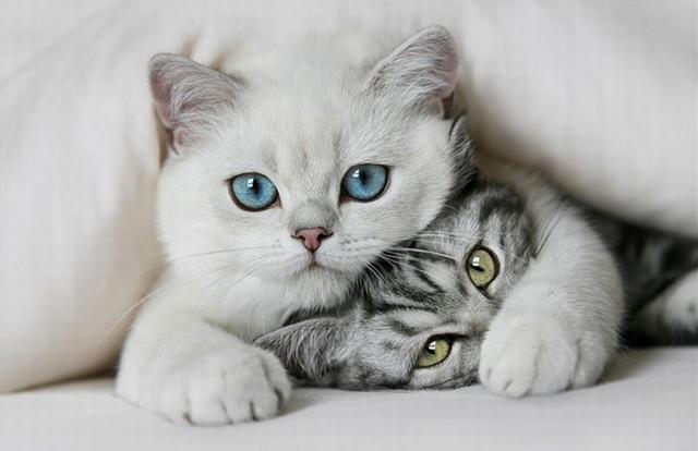 Кошка4 (640x414, 89Kb)
