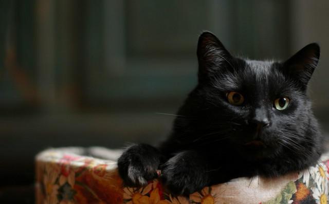 Кошка14 (640x397, 80Kb)