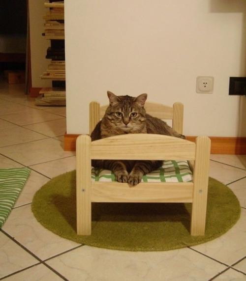 Кроватка для кошки своими руками фото