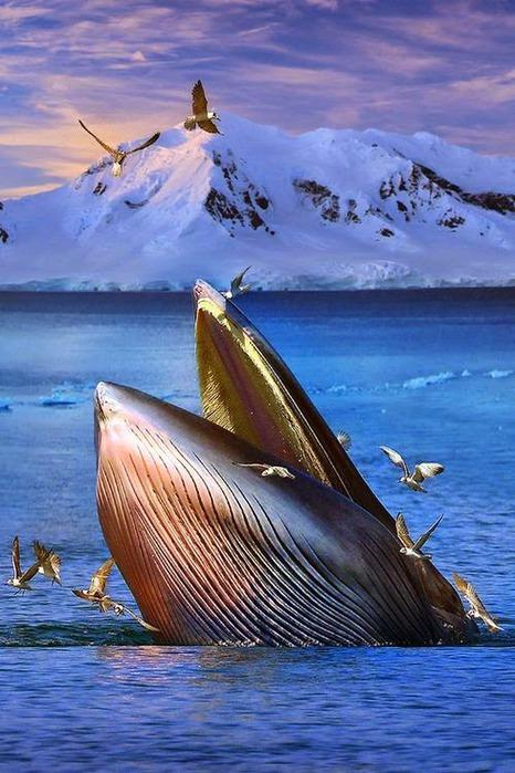 синий кит (466x700, 112Kb)