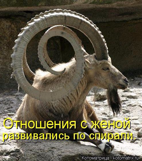 kotomatritsa_3 (495x559, 322Kb)