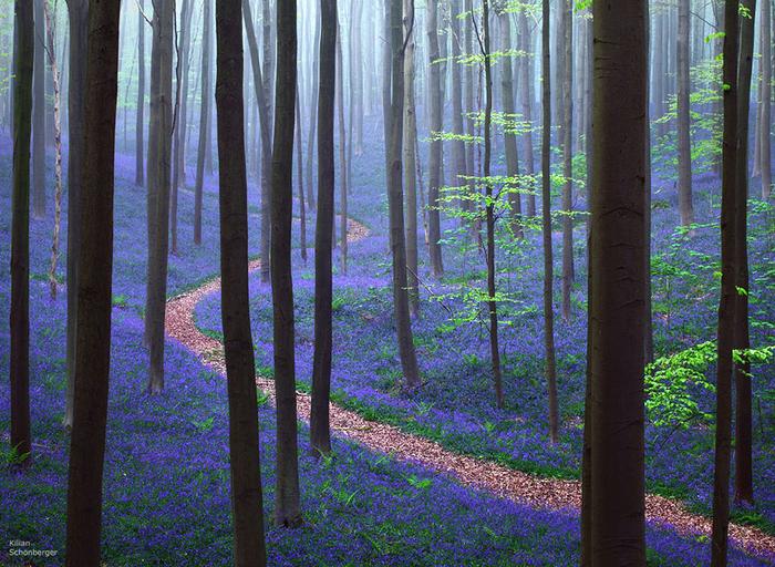 черничный лес (700x512, 618Kb)