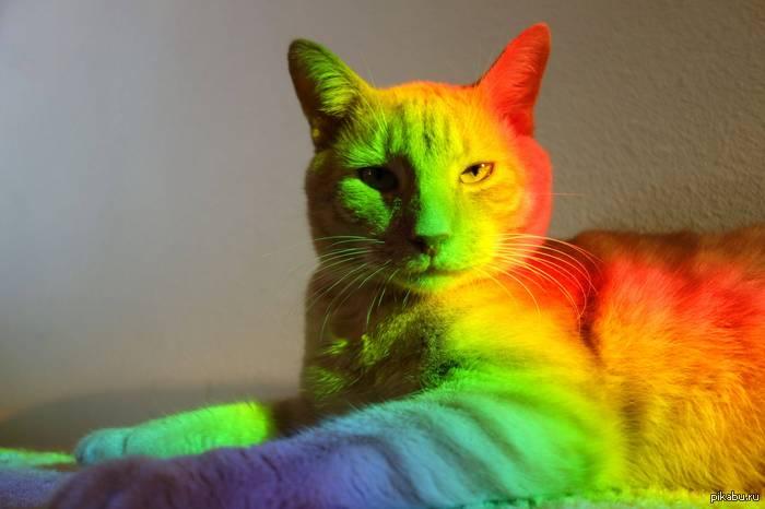 кот радуга (700x466, 198Kb)