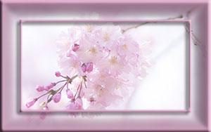 рамка розов (300x188, 24Kb)