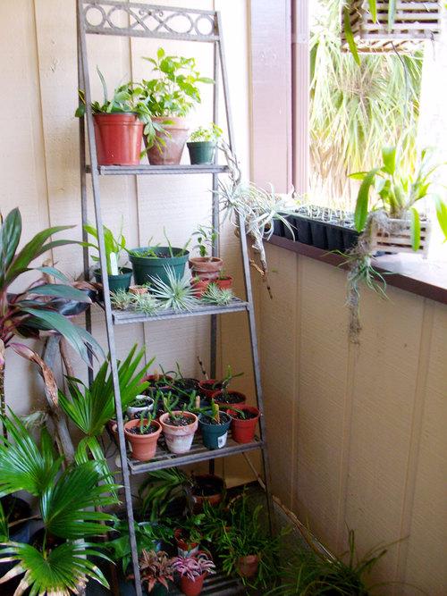 Сад на балконе - растения на шпалерах.