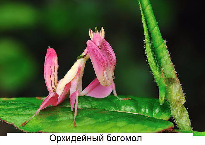 Животные самых неожиданных цветов4 (700x496, 262Kb)