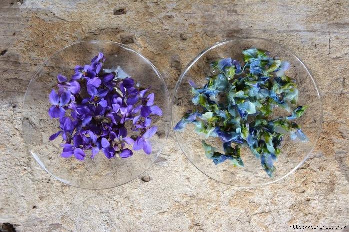 синий чай фото цветов и цена