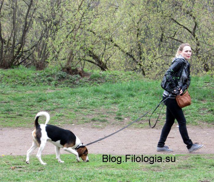 Девушка гуляет с собакой (699x596, 116Kb)