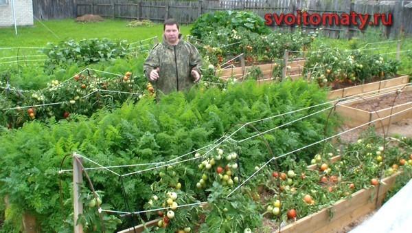 Выращивание-томатов-в-открытом-грунте (600x339, 95Kb)
