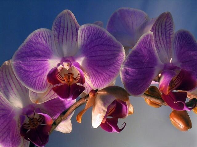 4924802_orhideya (640x479, 130Kb)