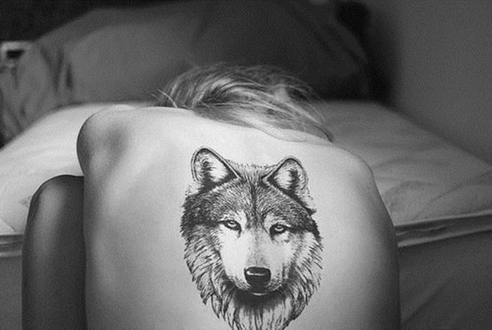 волкиы (700x469, 189Kb)