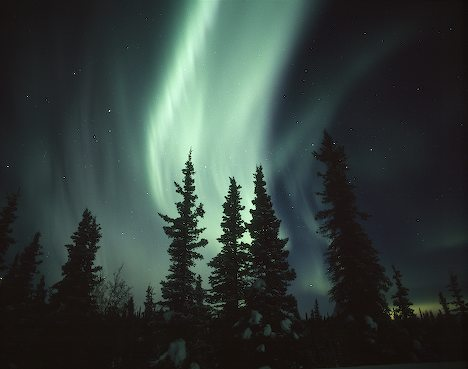 forest-northern-lights_8175 (468x369, 24Kb)