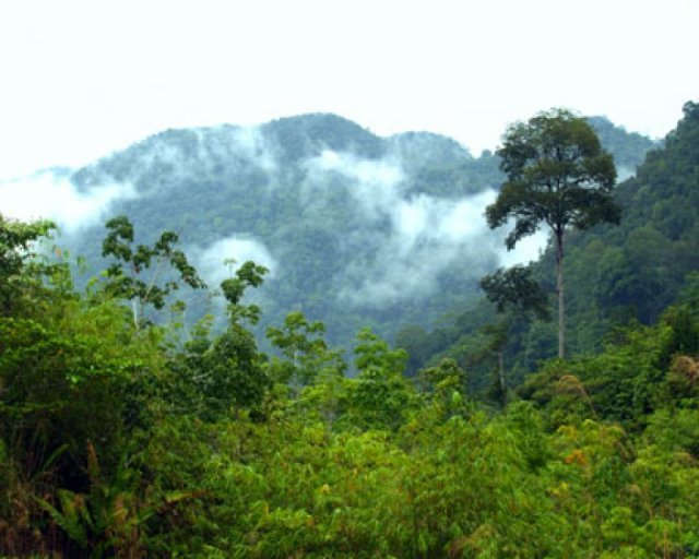 borneo_rainforest (640x512, 57Kb)