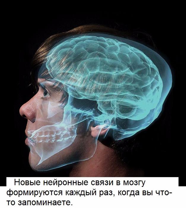 10 удивительных факта о человеческом мозге (627x700, 360Kb)